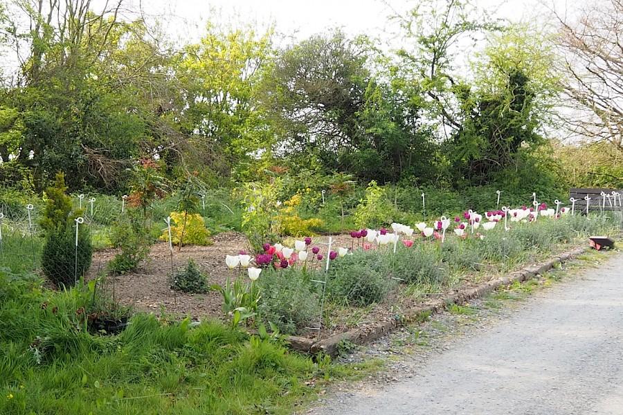 Spring at Beechwood April 2020
