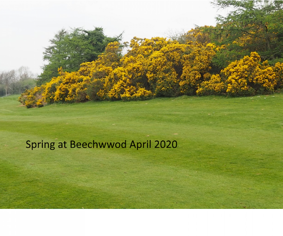 Spring at Beechwood April 2020